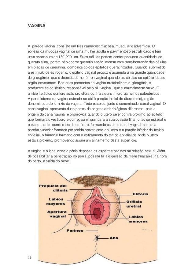 Asombroso Anatomía Abertura Vaginal Composición - Imágenes de ...