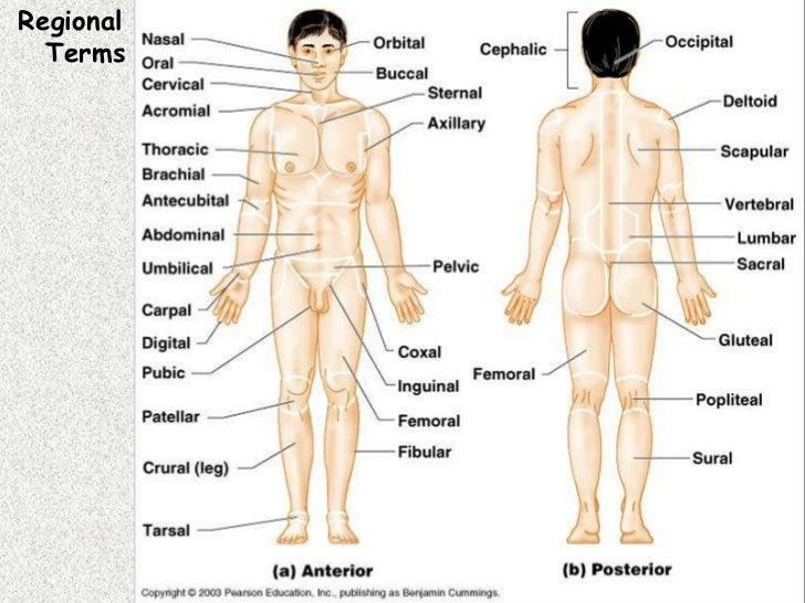 Science Department\'s Site / Unit 1: Body Orientation