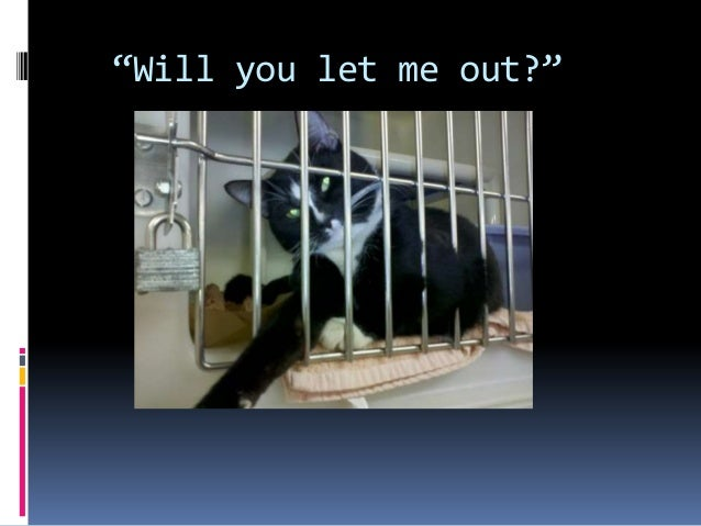 the effects of animal abuse Research finds a clear and compelling link between animal abuse and other violent acts animal abuse & violence the effect upon children.