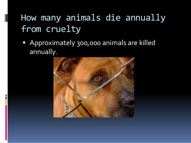 Should animal cruelty be banned?   Debate.org