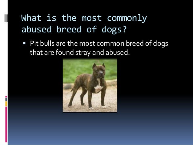 the effects of animal abuse The long lasting negative effects of abuse  people who abuse, are they evil sexual harassment in the work place, an ongoing problem  the deleterious effects of.