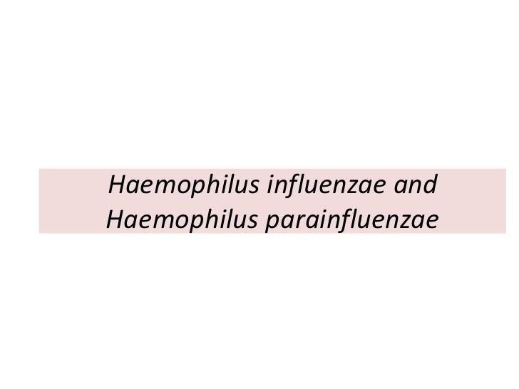 Haemophilus influenzae andHaemophilus parainfluenzae