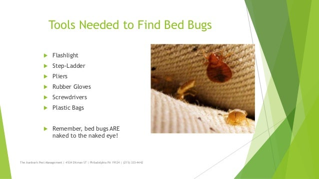 ... 3. Tools Needed To Find Bed Bugs ...