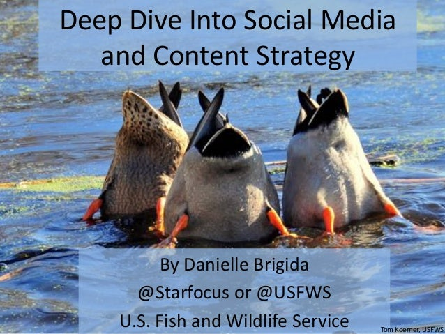 Deep	Dive	Into	Social	Media	 and	Content	Strategy	 By	Danielle	Brigida	 @Starfocus	or	@USFWS	 U.S.	Fish	and	Wildlife	Servi...
