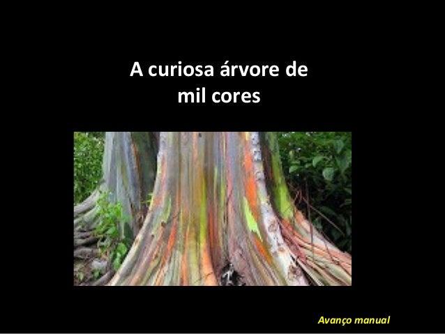 A curiosa árvore de mil cores Avanço manual