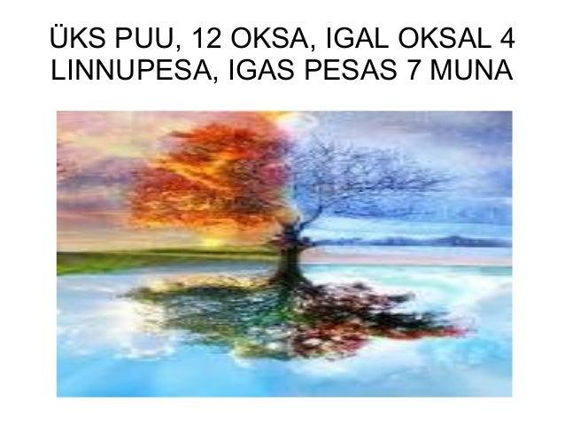 ÜKS PUU, 12 OKSA, IGAL OKSAL 4LINNUPESA, IGAS PESAS 7 MUNA