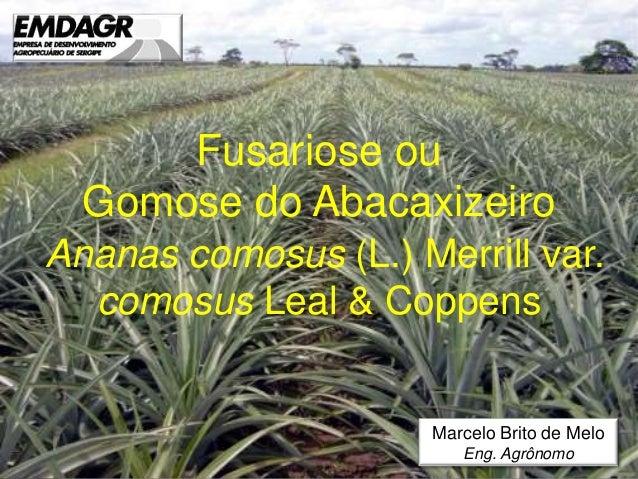 Fusariose ou Gomose do Abacaxizeiro Ananas comosus (L.) Merrill var. comosus Leal & Coppens Marcelo Brito de Melo Eng. Agr...