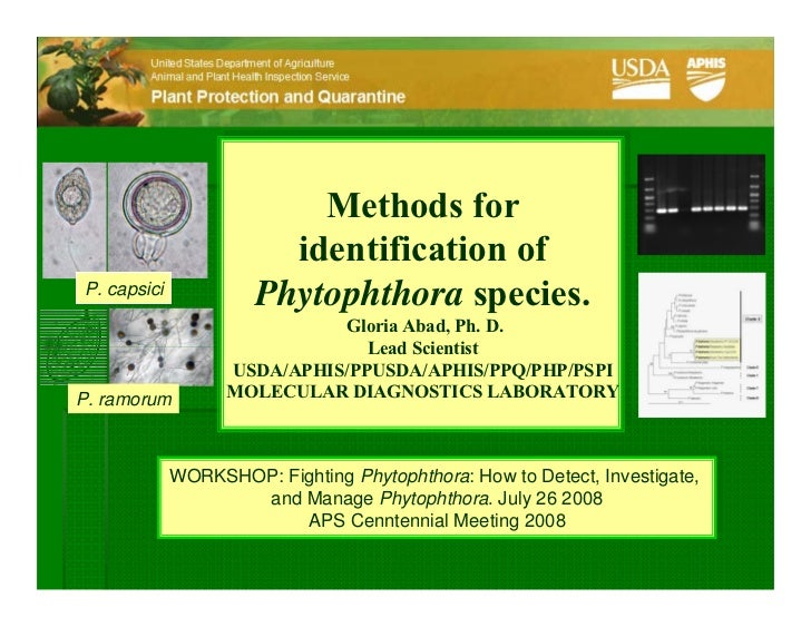 Methods for                         identification of P. capsici                       Phytophthora species.              ...