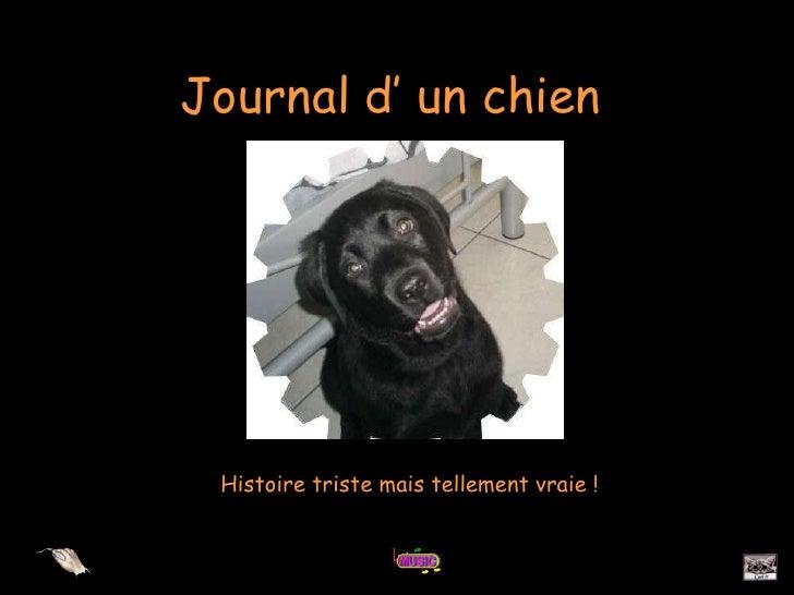 Journal d' un chien Histoire triste mais tellement vraie !