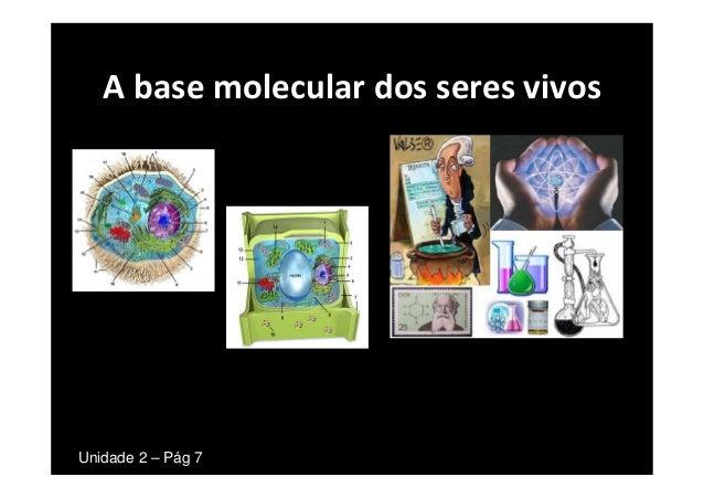 A base molecular dos seres vivosUnidade 2 – Pág 7
