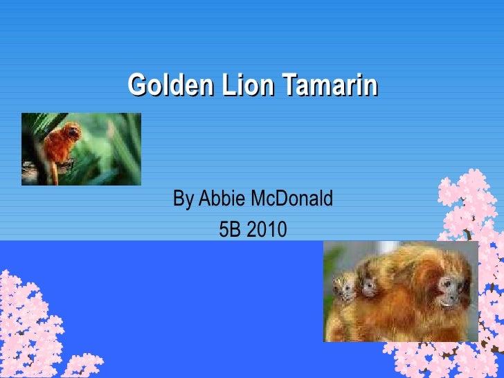 Golden Lion Tamarin By Abbie McDonald 5B 2010