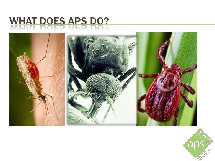 WHAT DOES APS DO?