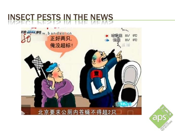 INSECT PESTS IN THE NEWS