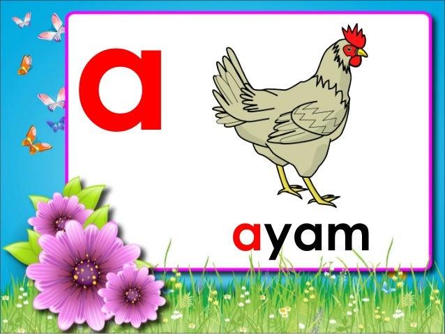 a ayam