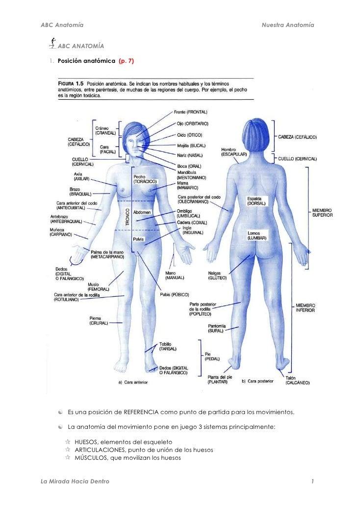 Moderno Recuerdo La Anatomía Abc Friso - Anatomía de Las Imágenesdel ...