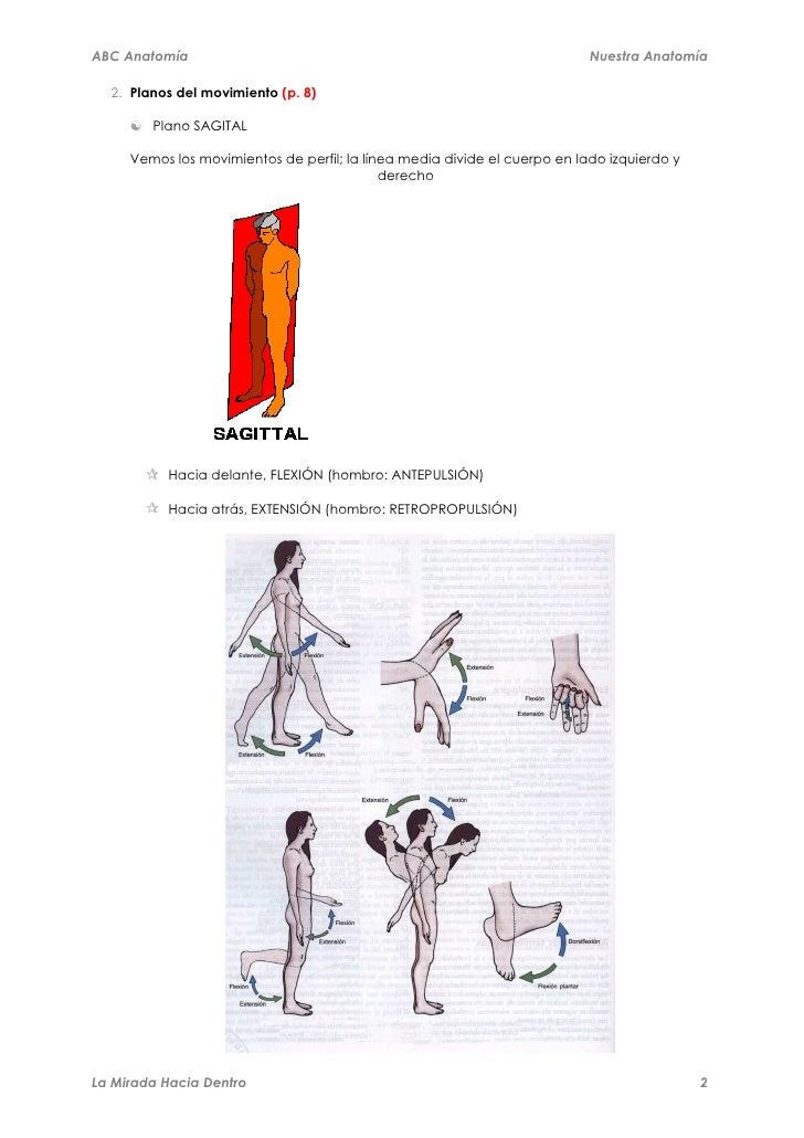 Abc anatomía