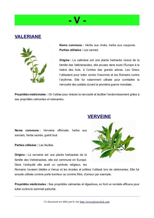 Phytotherapie les plantes medicinales qui gu rissent - Herbe a chat plante ...