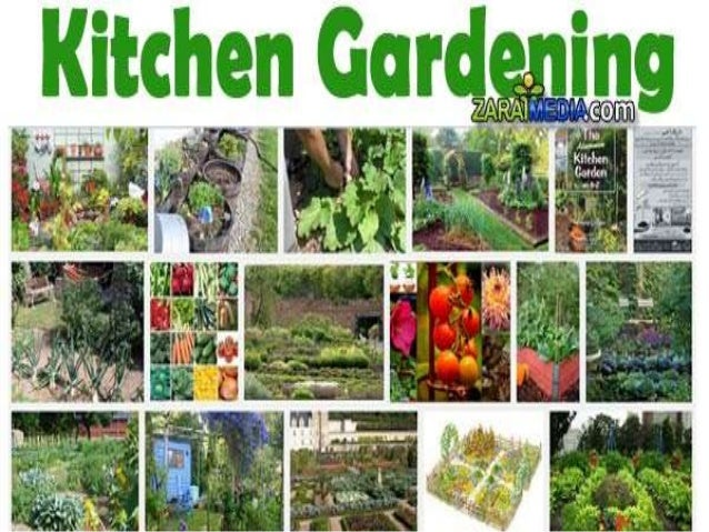 Abc Of Kitchen Gardening In Pakistan By Allah Dad Khan