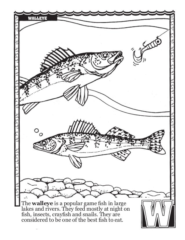Fishing abc 39 s coloring book for Night fishing spots near me
