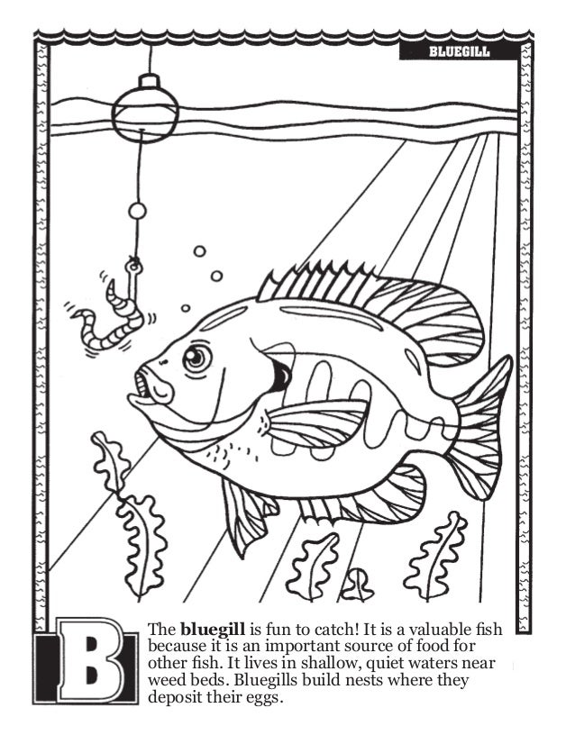 Fishing Abcs Coloring Book