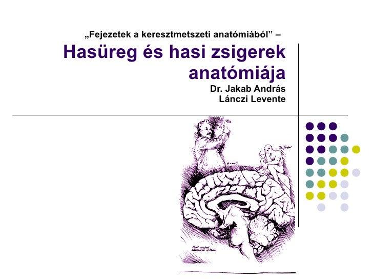 """"""" Fejezetek a keresztmetszeti anatómiából"""" –   Hasüreg és hasi zsigerek anatómiája  Dr. Jakab András Lánczi Levente"""