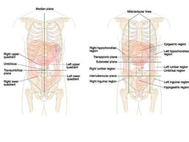 Topographic anatomy abdomen ccuart Image collections