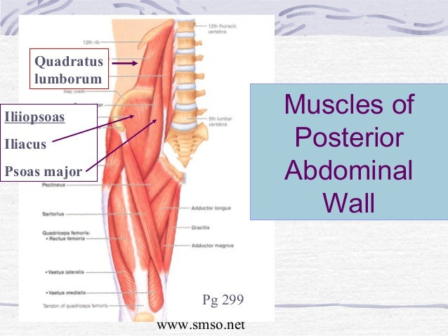 Abdomen 9 smso muscles of posterior abdominal ccuart Images