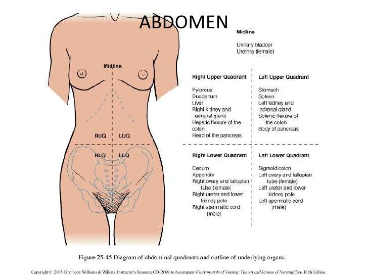abdomen mich, Skeleton
