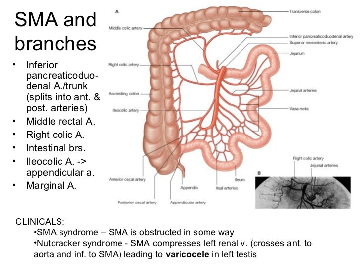 Abdomen Pelvis And Perineum Anatomy  jinekolojivegebelik
