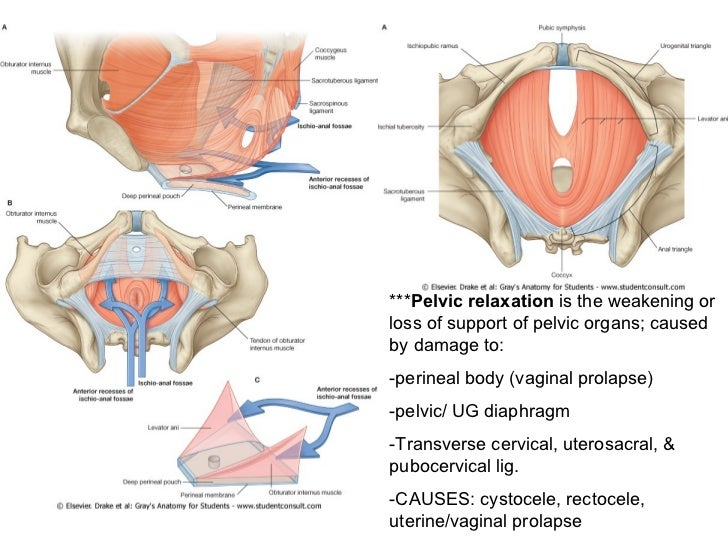 Pelvis and perineum anatomy images human body anatomy abdomen pelvis and perineum anatomy jinekolojivegebelik ccuart Choice Image