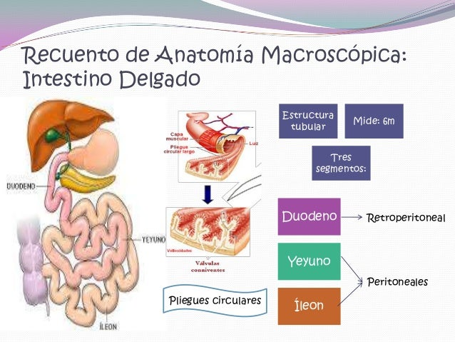 Abdomen Obstructivo