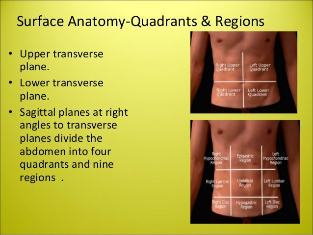 Abdomen radiography ppt daniel jp radiology technologist khorfa its capacity is 250ml 14 surface anatomy quadrants ccuart Image collections