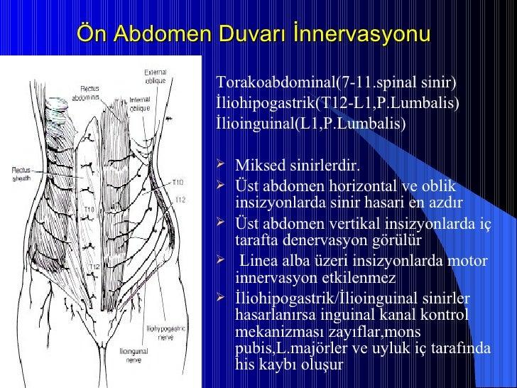 Ön Abdomen Duvarı İnnervasyonu <ul><li>Torakoabdominal(7-11.spinal sinir) </li></ul><ul><li>İliohipogastrik(T12-L1,P.Lumba...