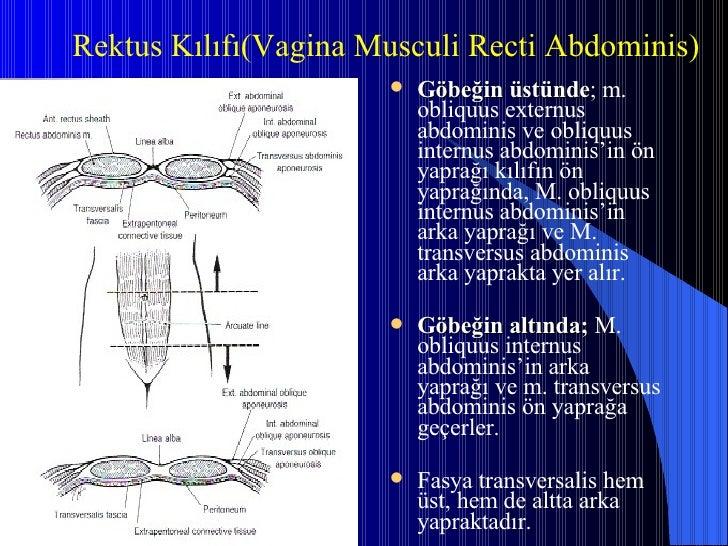 <ul><li>Göbeğin üstünde ;  m. obliquus externus abdominis ve obliquus internus abdominis'in ön yaprağı kılıfın ön yaprağın...