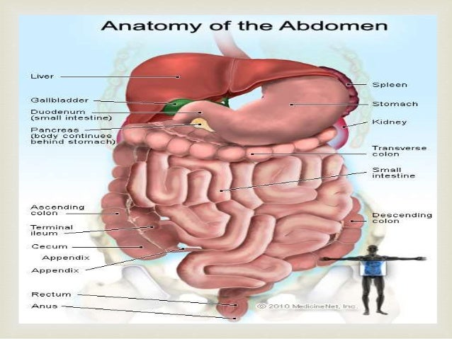 liver abdomen - DriverLayer Search Engine