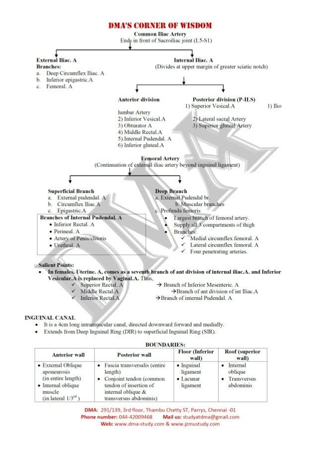 DMA's Anatomy of abdomen & pelvis in Nutshell