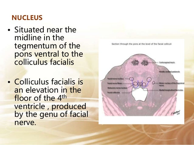 Abducens nerve course and relation for Floor of 4th ventricle