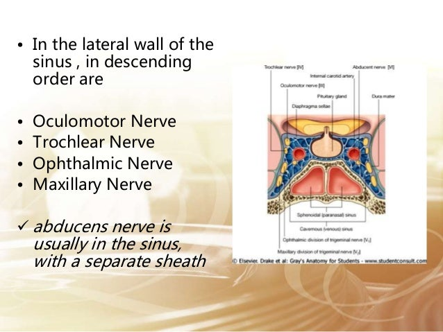 Abducens Nerve - Course and relation.