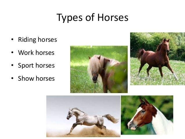 abdulla horse riding presentationtypes of horses \u2022 riding