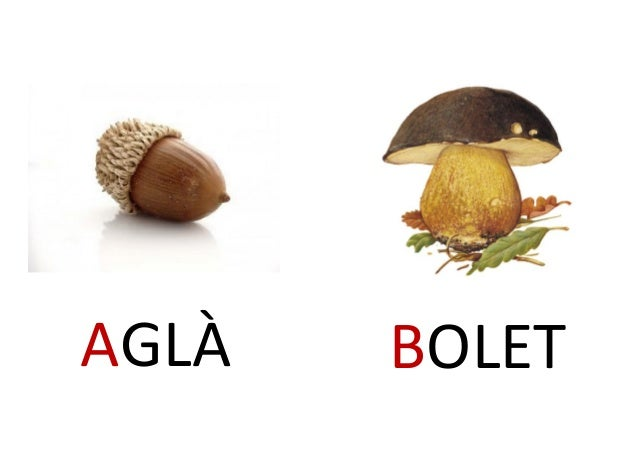 AGLÀ BOLET