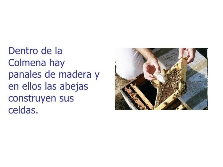 Dentro de laColmena haypanales de madera yen ellos las abejasconstruyen susceldas.
