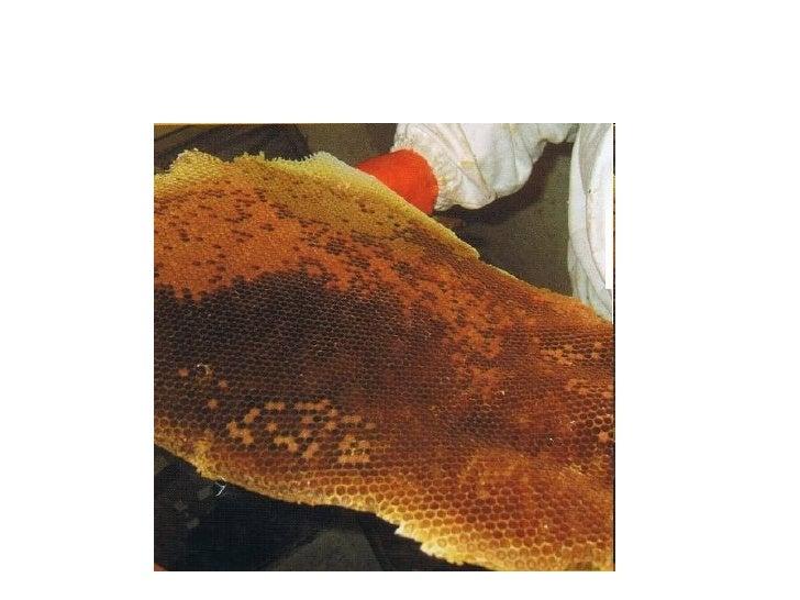 Si no se lesmolesta las abejasno pican y sonmuy buenasamigas.