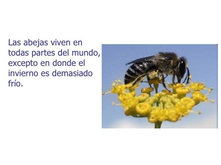 Las abejas viven entodas partes del mundo,excepto en donde elinvierno es demasiadofrío.