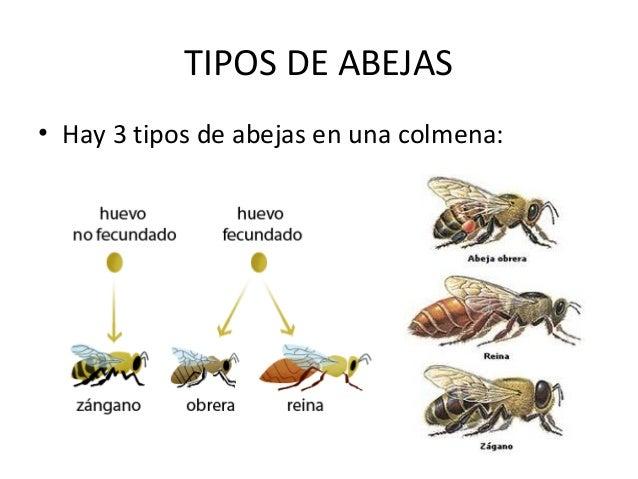importancia de las abejas pdf