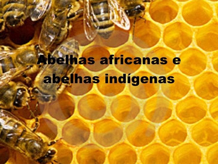 Abelhas africanas e abelhas indígenas