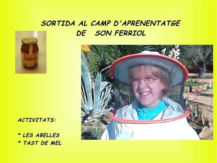 SORTIDA AL CAMP D'APRENENTATGE              DE SON FERRIOL     ACTIVITATS:  * LES ABELLES * TAST DE MEL