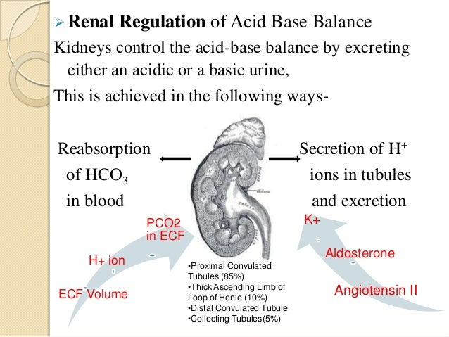 18 renal acid base balance Affect acid–base balance  may reduce protein catabolism and loss of muscle  mass and improve bone metabolism [13,16–18] moreover  a strong  relationship between the total renal nae and ph value in 24-h urine.