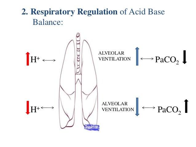 renal regulation of acid base balance pdf
