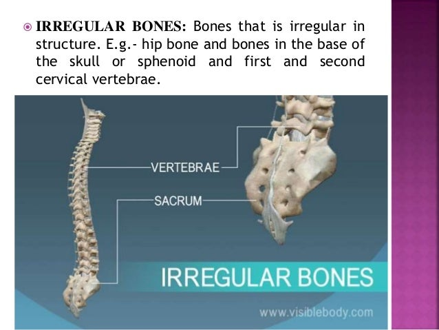  IRREGULAR BONES: Bones that is irregular in structure. E.g.- hip bone and bones in the base of the skull or sphenoid and...