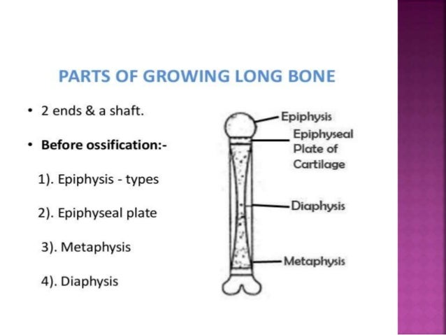  Facial Bones(14)  Maxilla (2)  Zygomatic (2)  Mandible (1)  Nasal (2)  Palatine (2)  Inferior nasal concha (2)  L...